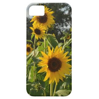 Sunflower Field iPhone SE/5/5s Case