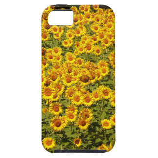Sunflower Field iPhone SE/5/5s Case