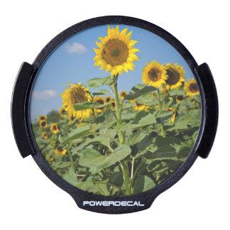 Sunflower field LED car decal