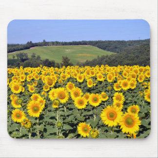 Sunflower field mousepads