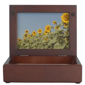 Sunflower field keepsake boxes