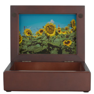 Sunflower field memory boxes