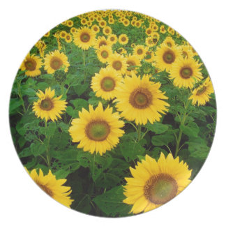 sunflower field plate