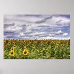 Sunflower-Field Print