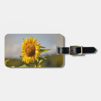 Sunflower field sunflower Helianthus annuus Bag Tags