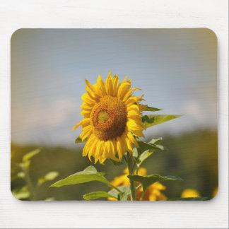 Sunflower field, sunflower (Helianthus annuus) Mouse Pad