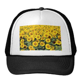 Sunflower field trucker hat
