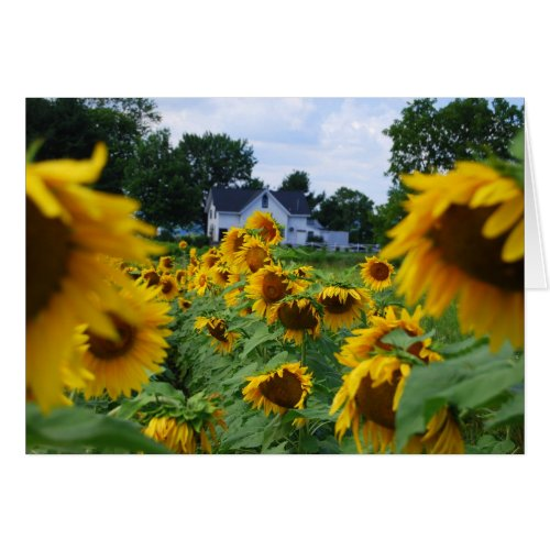 Sunflower Field with Farmhouse Card