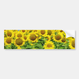 Sunflower Fields Bumper Stickers
