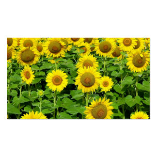Sunflower Fields Double-Sided Standard Business Cards (Pack Of 100)