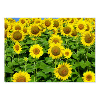 Sunflower Fields Large Business Cards (Pack Of 100)