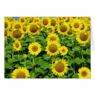 Sunflower Fields Card