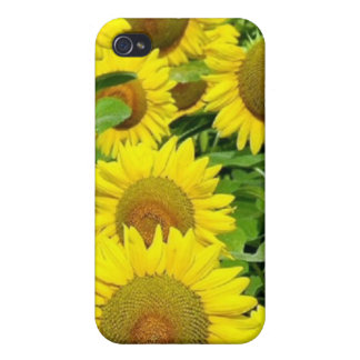 Sunflower Fields Case For iPhone 4