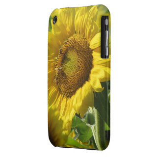 Sunflower Fields Case-Mate iPhone 3 Cases