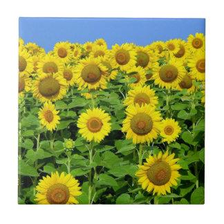 Sunflower Fields Ceramic Tile