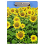 Sunflower Fields Clipboards