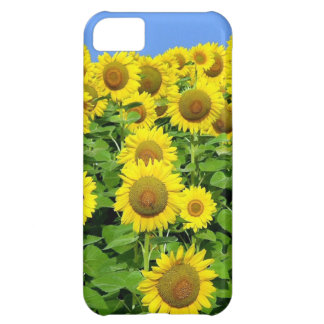 Sunflower Fields Cover For iPhone 5C