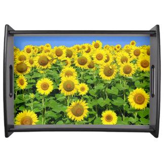 Sunflower Fields Food Trays