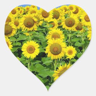 Sunflower Fields Heart Sticker