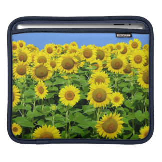 Sunflower Fields iPad Sleeve