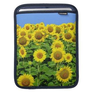 Sunflower Fields iPad Sleeves