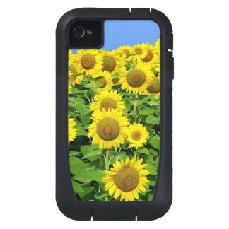 Sunflower Fields iPhone4 Case