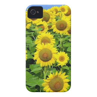 Sunflower Fields iPhone 4 Case-Mate Cases