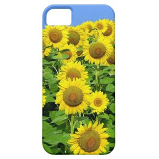 Sunflower Fields iPhone Cases Personalized