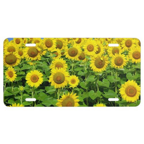 Sunflower Fields License Plate