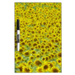 Sunflower fields Limousin Dry Erase Boards