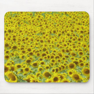 Sunflower fields Limousin Mouse Pad