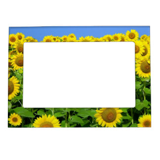 Sunflower Fields Magnetic Photo Frame