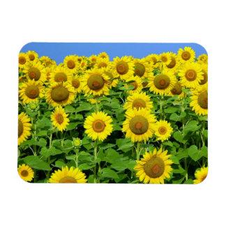 Sunflower Fields Rectangular Photo Magnet