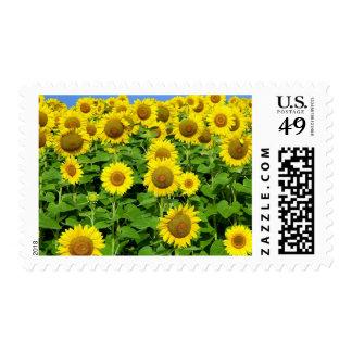Sunflower Fields Stamps
