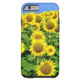 Sunflower Fields Tough iPhone 6 Case
