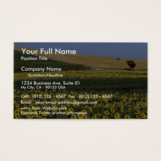 Sunflower fields, Tuscany, Italy Business Card