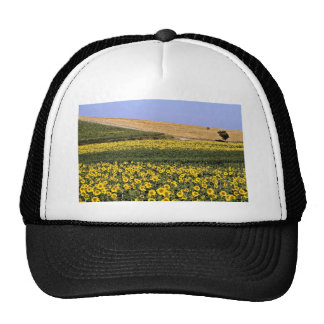 Sunflower fields, Tuscany, Italy  flowers Mesh Hat