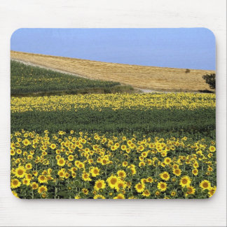 Sunflower fields Tuscany Italy Mousepads