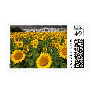 Sunflower fields, white hill town of Bornos Postage Stamp