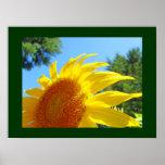 Sunflower Fine Art Prints Summer Garden Floral Print