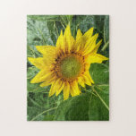 Sunflower floral jigsaw puzzle