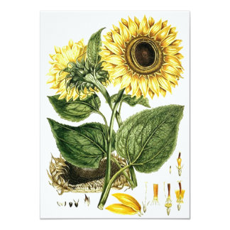SUNFLOWER FLOWER Botanical Blank Party Invitations