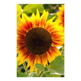 Sunflower Flyers