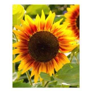 Sunflower Personalized Flyer