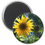 Sunflower Fridge Magnet