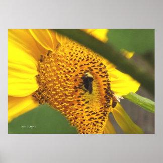 Sunflower Garden 2 Poster