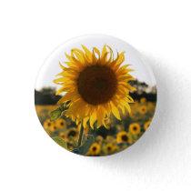 Sunflower garden.Beautiful flowers Button