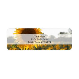 Sunflower garden.Beautiful flowers Label