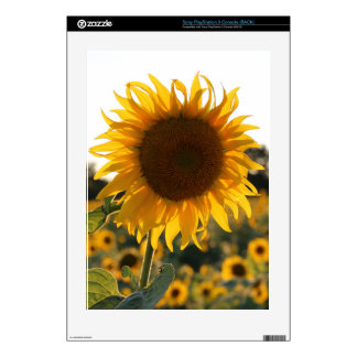 Sunflower garden.Beautiful flowers Skins For PS3 Console