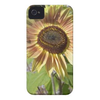 Sunflower Garden iPhone4 Case